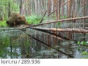 Купить «Упавшие деревья на болоте», фото № 289936, снято 30 июня 2007 г. (c) Сергей Сынтин / Фотобанк Лори