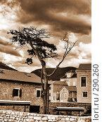 Купить «Одинокое дерево», фото № 290260, снято 8 сентября 2007 г. (c) Анна Янкун / Фотобанк Лори