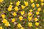 Желтые тюльпаны. Yellow tulip close up, фото № 290664, снято 18 мая 2008 г. (c) Угоренков Александр / Фотобанк Лори