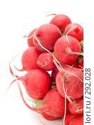 Купить «Редис, крупный план», фото № 292028, снято 19 мая 2008 г. (c) Угоренков Александр / Фотобанк Лори