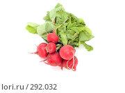 Купить «Пучок редиса», фото № 292032, снято 19 мая 2008 г. (c) Угоренков Александр / Фотобанк Лори