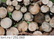 Купить «Поленница дров», фото № 292060, снято 16 мая 2008 г. (c) Смыгина Татьяна / Фотобанк Лори