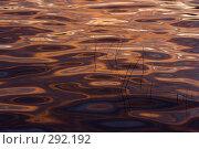 Купить «Абстракции на воде», фото № 292192, снято 18 сентября 2018 г. (c) Андрей Пашкевич / Фотобанк Лори