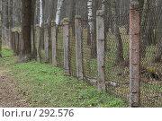 Купить «Приокско-террасный заповедник. Зубровый питомник. Забор, предназначенный защищать посетителей от зубров», фото № 292576, снято 13 апреля 2008 г. (c) Артем Ефимов / Фотобанк Лори