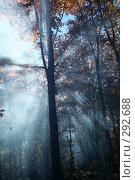Купить «Лучи лесного солнца в дыму», фото № 292688, снято 26 октября 2007 г. (c) Юрий Гник / Фотобанк Лори