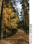 Купить «Осень в лесу», фото № 294068, снято 7 октября 2007 г. (c) Gagara / Фотобанк Лори