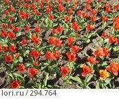 Купить «Поле красных тюльпанов», фото № 294764, снято 10 апреля 2008 г. (c) ИВА Афонская / Фотобанк Лори