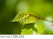 Нежные весенние листья на фоне зеленой растительности. Стоковое фото, фотограф Harry / Фотобанк Лори