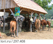 Купить «Лошади», фото № 297408, снято 16 августа 2006 г. (c) Дмитрий / Фотобанк Лори