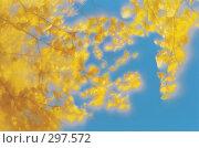Осенние ветки березы на фоне голубого неба. Фотография, монокль. Стоковое фото, фотограф Гребенников Виталий / Фотобанк Лори
