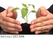 Купить «Молодой росток в руках», фото № 297944, снято 30 апреля 2008 г. (c) Dzianis Miraniuk / Фотобанк Лори