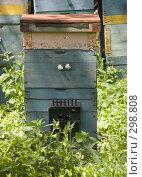 Купить «Пчелиный улей», фото № 298808, снято 3 мая 2008 г. (c) Артем Ефимов / Фотобанк Лори