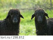 Купить «Овца с ягненком», фото № 298812, снято 2 мая 2008 г. (c) Артем Ефимов / Фотобанк Лори