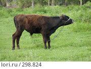 Купить «Бычок», фото № 298824, снято 2 мая 2008 г. (c) Артем Ефимов / Фотобанк Лори
