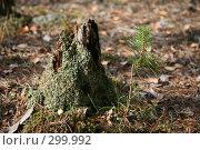 Купить «Пенек в осеннем лесу», фото № 299992, снято 23 сентября 2007 г. (c) Gagara / Фотобанк Лори