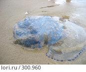 Купить «Медуза, выброшенная на берег», фото № 300960, снято 29 августа 2006 г. (c) Евгения Лаврова / Фотобанк Лори