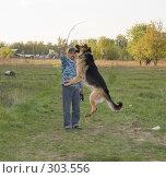 Купить «Восточноевропейская (немецкая) овчарка прыгает за палкой», фото № 303556, снято 12 мая 2008 г. (c) Эдуард Межерицкий / Фотобанк Лори