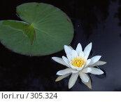 Купить «Водяная лилия нимфея», фото № 305324, снято 28 июня 2007 г. (c) Елена Александрова / Фотобанк Лори