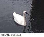 Купить «Лебедь», фото № 306392, снято 16 апреля 2008 г. (c) Бяков Вячеслав / Фотобанк Лори