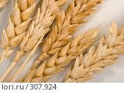 Купить «Спелые колосья пшеницы», фото № 307924, снято 10 января 2008 г. (c) Harry / Фотобанк Лори