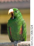 Купить «Зеленый попугай кричит», фото № 308524, снято 17 мая 2008 г. (c) Владимир Воякин / Фотобанк Лори