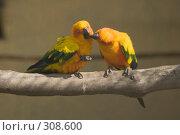 Купить «Попугай Солнечная аратинга (Aratinga solstitialis)», фото № 308600, снято 17 мая 2008 г. (c) Владимир Воякин / Фотобанк Лори