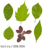 Зеленые листья на белом фоне. Стоковое фото, фотограф Смыгина Татьяна / Фотобанк Лори