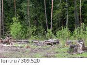 Купить «Поваленные деревья на краю леса», фото № 309520, снято 10 мая 2008 г. (c) Parmenov Pavel / Фотобанк Лори