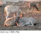 Купить «Олени. Deers», фото № 309792, снято 2 октября 2005 г. (c) sav / Фотобанк Лори
