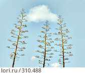 Экзотическое растение на фоне голубого неба, фото № 310488, снято 4 апреля 2008 г. (c) NM / Фотобанк Лори