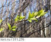 Купить «Весна», фото № 311276, снято 27 апреля 2008 г. (c) Бяков Вячеслав / Фотобанк Лори