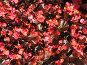 Красные цветы. Фон., фото № 311592, снято 5 июня 2008 г. (c) Елена Беляева / Фотобанк Лори
