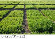 Купить «Зеленая трава», фото № 314252, снято 15 апреля 2007 г. (c) Максим Горпенюк / Фотобанк Лори