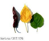 Купить «Красный перец и два листа на белом фоне», фото № 317176, снято 19 мая 2006 г. (c) A Челмодеев / Фотобанк Лори