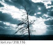 Купить «Наедине с вечностью», фото № 318116, снято 29 сентября 2007 г. (c) Барабанов Максим Олегович / Фотобанк Лори