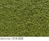 Купить «Текстура - водные растения», фото № 319608, снято 30 июля 2006 г. (c) A Челмодеев / Фотобанк Лори