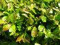 Капли на листьях, фото № 325340, снято 30 апреля 2008 г. (c) ИВА Афонская / Фотобанк Лори