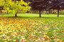 Осенний парк, фото № 325700, снято 27 июля 2017 г. (c) Михаил / Фотобанк Лори