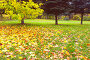 Осенний парк, фото № 325700, снято 20 января 2017 г. (c) Михаил / Фотобанк Лори