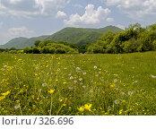 Купить «Летний солнечный день на цветущей поляне», фото № 326696, снято 8 июня 2008 г. (c) Олег Рубик / Фотобанк Лори
