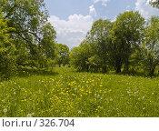 Купить «Летний солнечный день на цветущей поляне», фото № 326704, снято 24 апреля 2018 г. (c) Олег Рубик / Фотобанк Лори