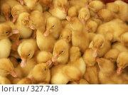 Купить «Маленькие желтые утята», фото № 327748, снято 27 мая 2008 г. (c) Ирина Игумнова / Фотобанк Лори