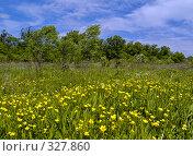 Купить «Летний солнечный день на цветущей поляне», фото № 327860, снято 10 июня 2008 г. (c) Олег Рубик / Фотобанк Лори