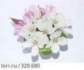 Купить «Букетик из цветов ранетки», фото № 329680, снято 30 мая 2008 г. (c) Ирина Солошенко / Фотобанк Лори