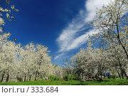 Купить «Вишневый сад», фото № 333684, снято 9 мая 2008 г. (c) Евгений Захаров / Фотобанк Лори