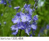 Голубые цветки. Стоковое фото, фотограф Панов Андрей / Фотобанк Лори