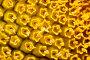 Подсолнечник в пору цветения. Макро., фото № 341952, снято 27 июня 2008 г. (c) Федор Королевский / Фотобанк Лори