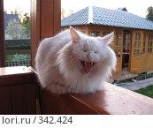 Зевок. Стоковое фото, фотограф Гапотченко Дмитрий / Фотобанк Лори
