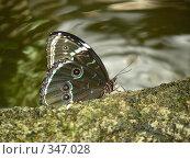 Бабочка на стволе дерева. Стоковое фото, фотограф Tyurina Ekaterina / Фотобанк Лори