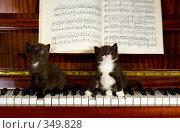 Купить «Котята на пианино Small kittens», фото № 349828, снято 18 мая 2008 г. (c) podfoto / Фотобанк Лори